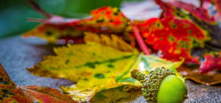 AUTUMN/jesień