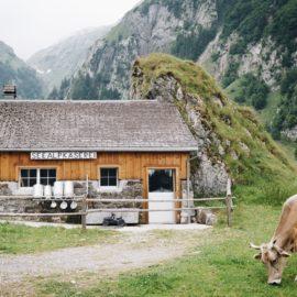 FARM ANIMALS/zwierzęta z farmy