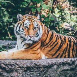 ZOO ANIMALS/zwierzęta w zoo